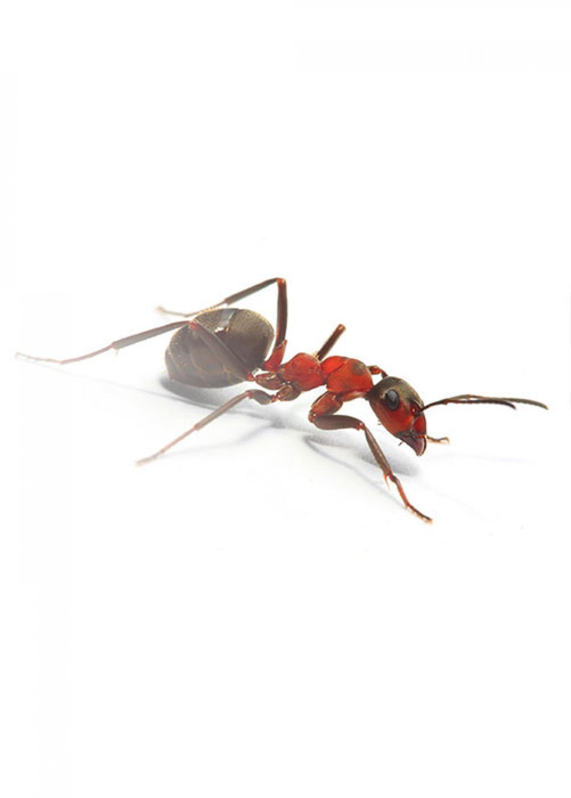 pests-img